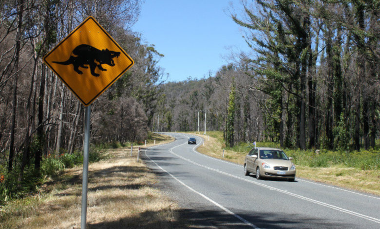 Photo of Driving in Tasmania